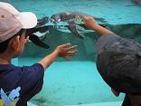 20070827-penguin.JPG